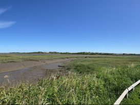 Wyre Estuary Country Park - C Mugonyi